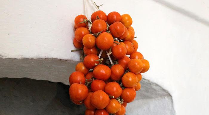 Adatto all'utilizzo in IV Gamma l'antico pomodoro da serbo