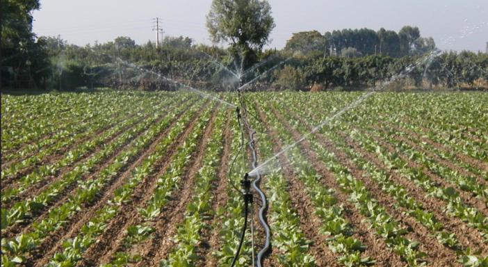 Colture in pieno campodecimate dal clima: meno prodotto, meno qualità
