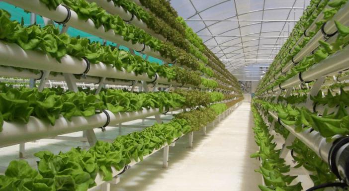 Vertical Farm, Padova capitale innovativa delle coltivazioni indoor