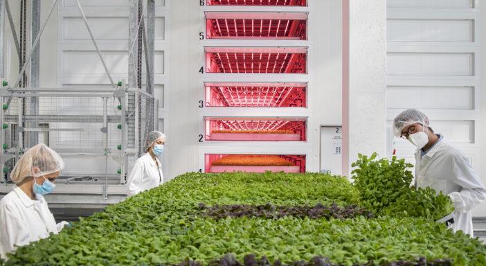 Agricola Moderna punta a decuplicare la produzione in vertical farming